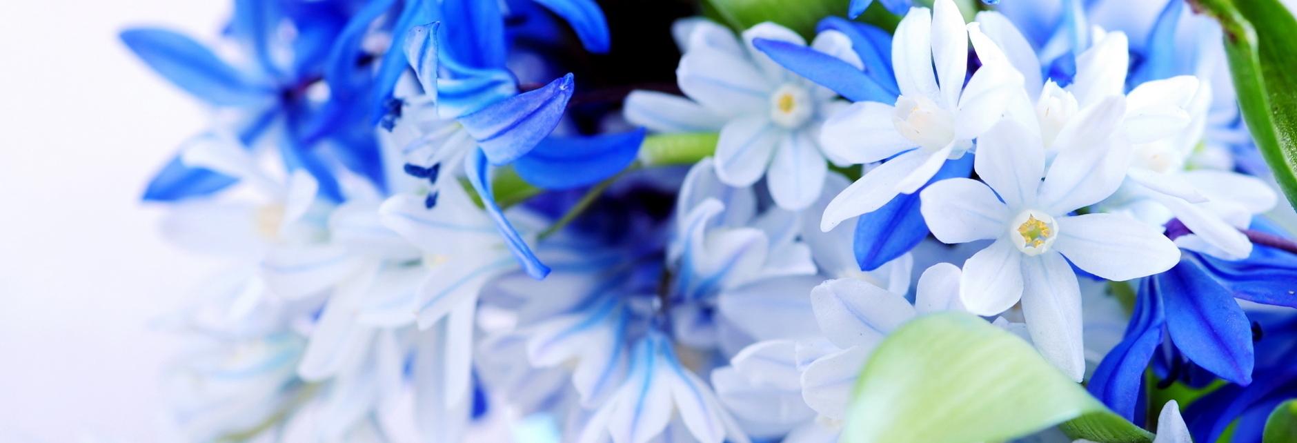 7001876-hd-flower-background.jpg